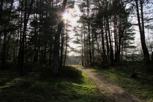forest-path-319969_640