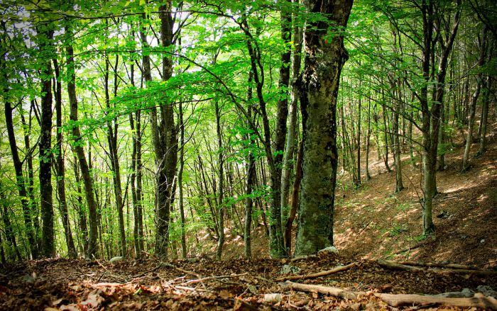 1200px-Particolare_della_foresta_di_faggi_-_Parco_Naturale_dei_Monti_Aurunci